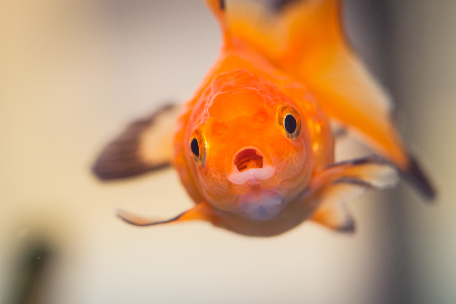 To all the fish that i loved before benson kua 39 s blog for Fish eye wart
