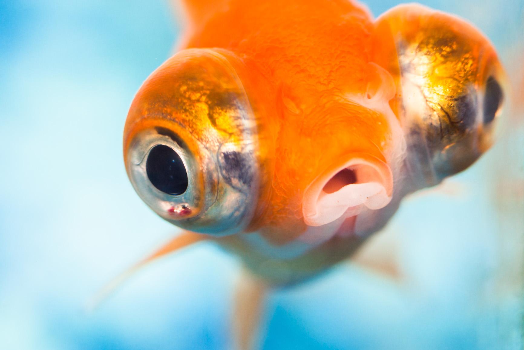 ... aquarium. I named him Lippy because of his large Angelina Jolie lips